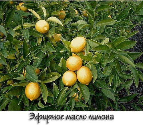 Ефірна олія лимона