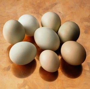 зберігання курячих яєць