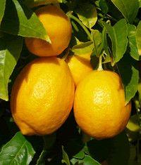 Захоплююче - про ефірному маслі лимона.